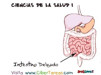Intestino Delgado - Ciencias de la Salud_1