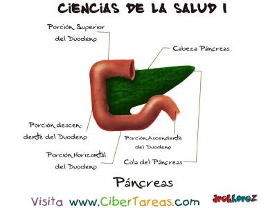 Pancreas - Ciencias de la Salud_1