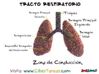 Zona de Conduccion del Tracto Respiratorio 2  - Ciencias de la Salud_1