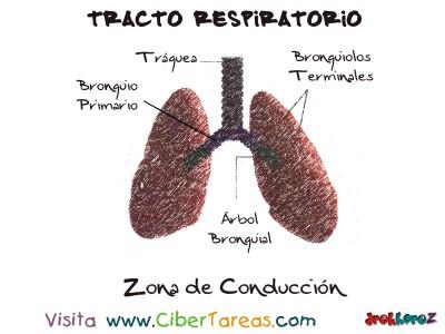Zona de Conduccion del Tracto Respiratorio  - Ciencias de la Salud_1
