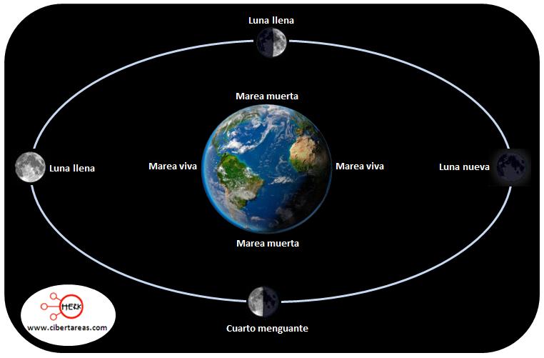 ciclo de mareas vivas y muertas