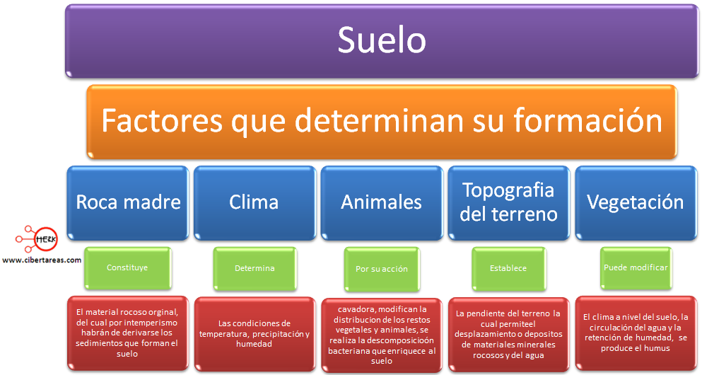 perfil y tipos de suelo geograf a cibertareas