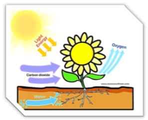 influencia del sol en la tierra fotosintesis