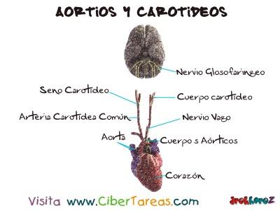 Aorticos y Caroticos - Ciencias de la Salud_1