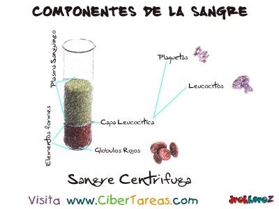 Componentes de la Sangre - Ciencias de la Salud_1