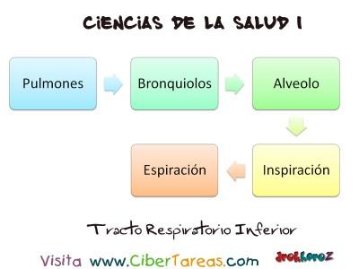 Tracto Respiratorio Inferior - Ciencias de la Salud_1