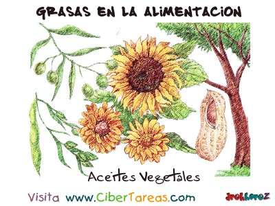 Aceites Vegetal - Grasas en la Alimentacion