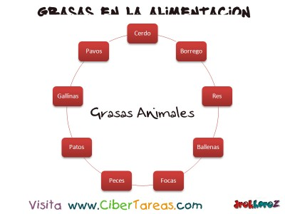 Carne de Animales - Grasas en la Alimentacion