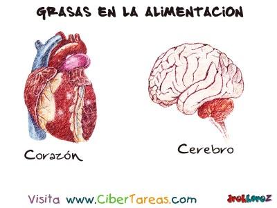 Corazon y Cerebro - Grasas en la Alimentacion