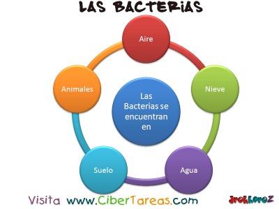 Ubicacion de las Bacterias - Las Bacterias