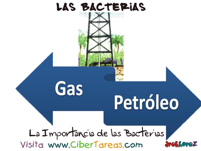 importancia tienen bacteria industria: