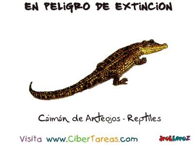 Caiman de Anteojos Reptiles - Peligro de Extincion