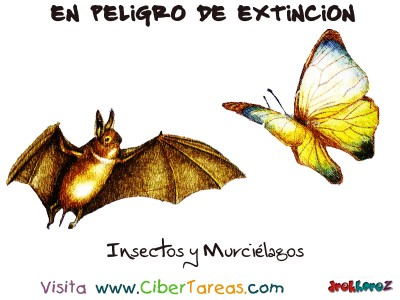 Insectos y Murcielagos en Peligro de Extincion