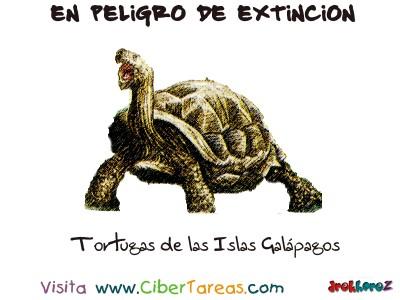 Tortugas de las Islas Galapagos Reptiles - Peligro de Extincion