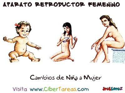 Cambios de Niña a Mujer - Aparato Reproductor Femenino