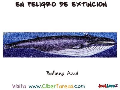 Ballena Azul - Peligro de Extincion