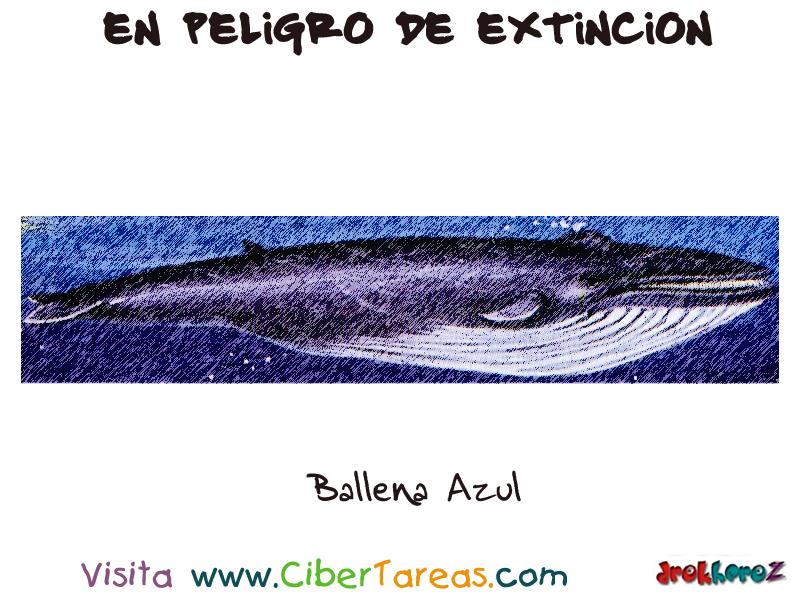 Lujo Anatomía De Ballena Azul Festooning - Anatomía de Las ...