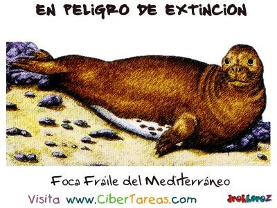 Foca Fraile del Mediterranea - Peligro de Extincion