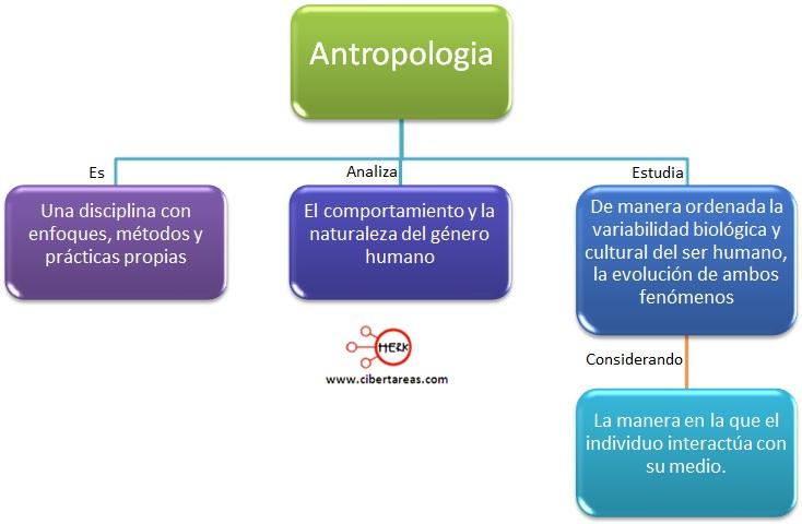mapa conceptual antropologia inroduccion a las ciencias sociales