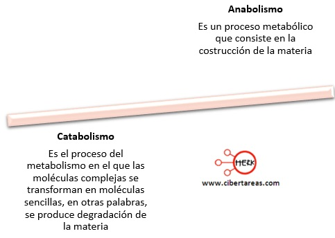 anabolismo catabolismo definicion