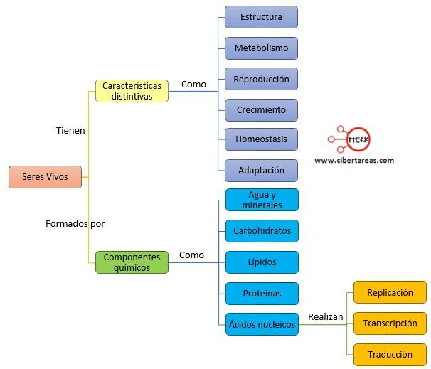 caracteristicas y componentes de los seres vivos