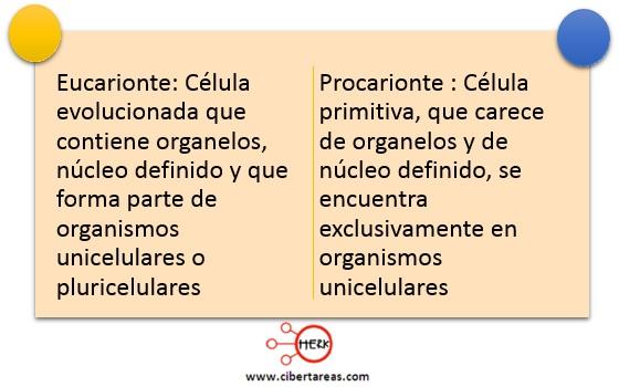 concepto eucarionte procarionte