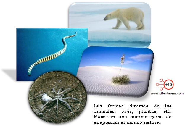 ejemplo adaptacion en los seres vivos
