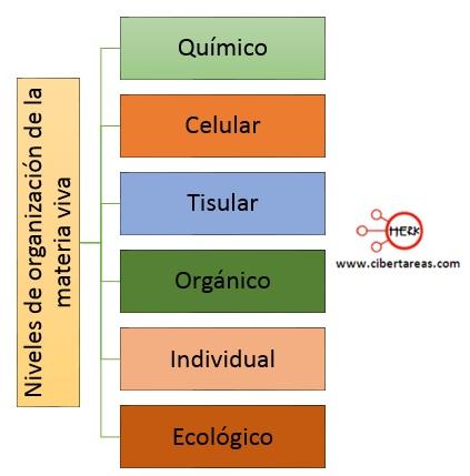 niveles de organizacion de la materia viva quimico celular tisular organico individual ecologico