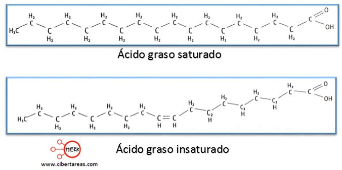 acido graso saturado acido graso insaturado formula