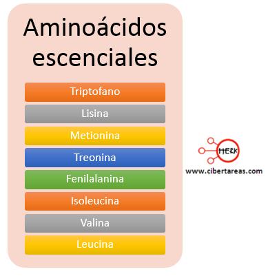 aminoacidos escenciales
