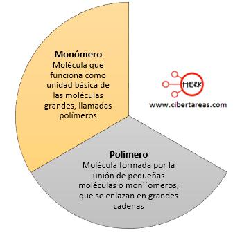 Biomoléculas orgánicas – Biología 1 | CiberTareas