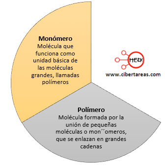 biomoleculas organicas monomero polimero