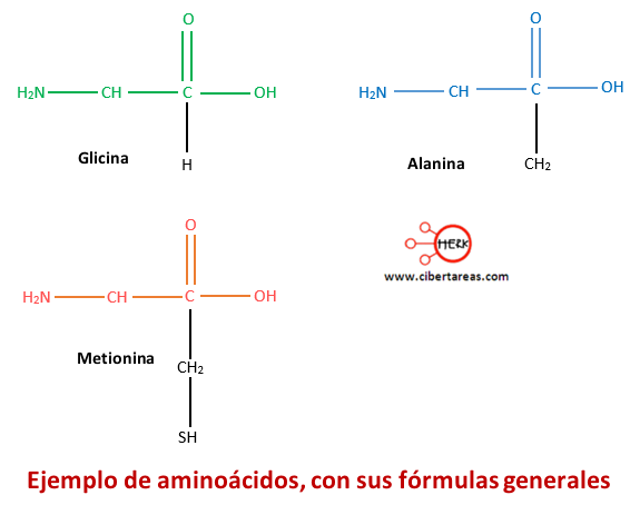 ejemplo de aminoacidos con sus formulas generales
