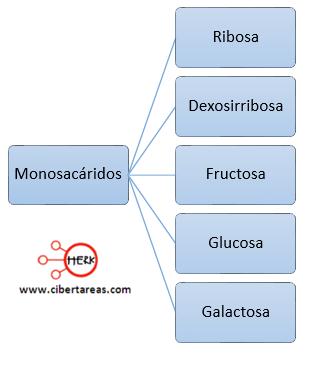 ejemplo de monosacaridos biomoleculas organicas