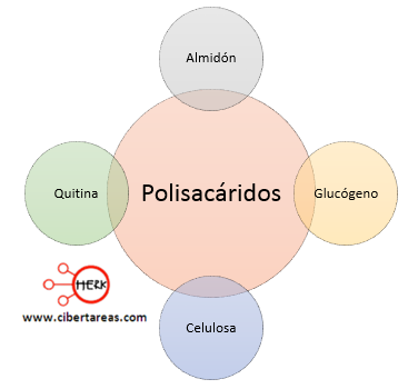 ejemplos de polisacaridos