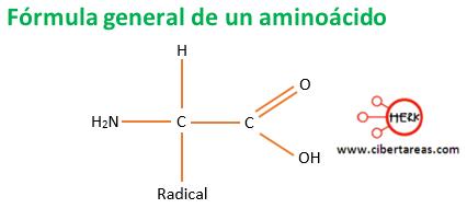 formula general de un aminoacido