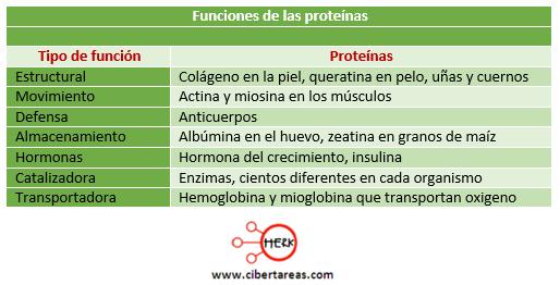 lista de los esteroides mas usados