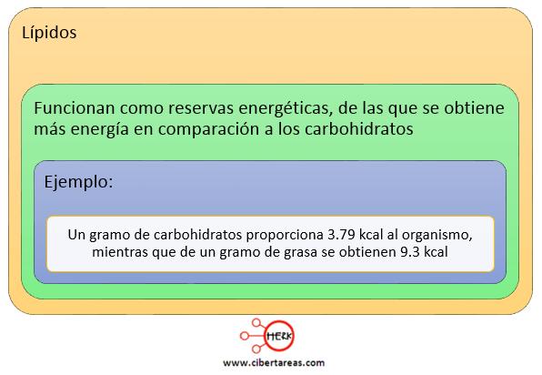 lipidos biomoleculas organicas