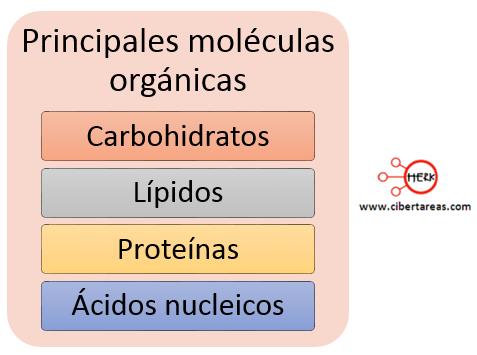 principales moleculas organicas