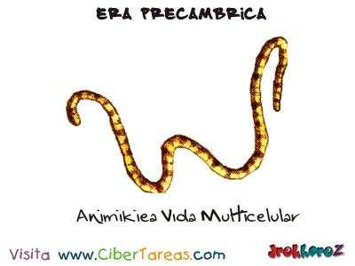 Animikiea Vida Multicelular - Era Precambrica