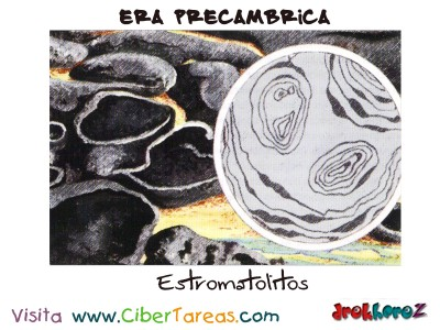 Estromatolitos - Era Precambricas