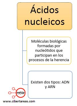 conceto acidos nucleicos mapa conceptual