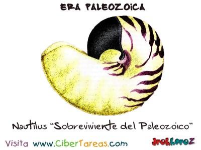 Nautilius Sobreviviente del Paleozoico - Era Paleozoica Prehistoria