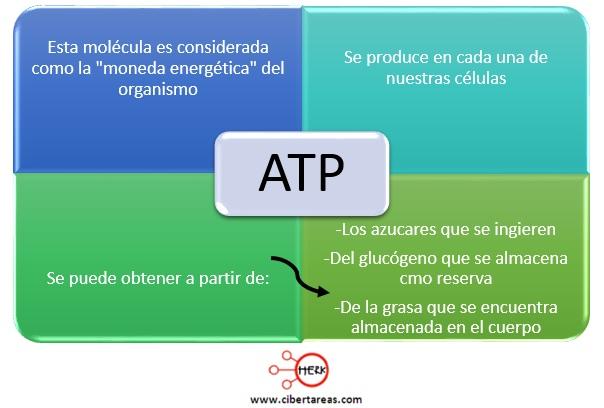 atp adenosin trifosfatico estructura funcion ciclo
