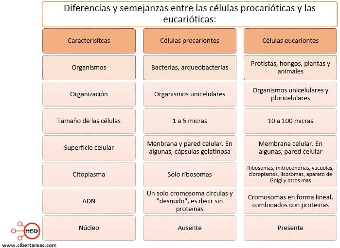 caracteristicas diferenicas y semejanzas de celulas procariontes y eucarionetes