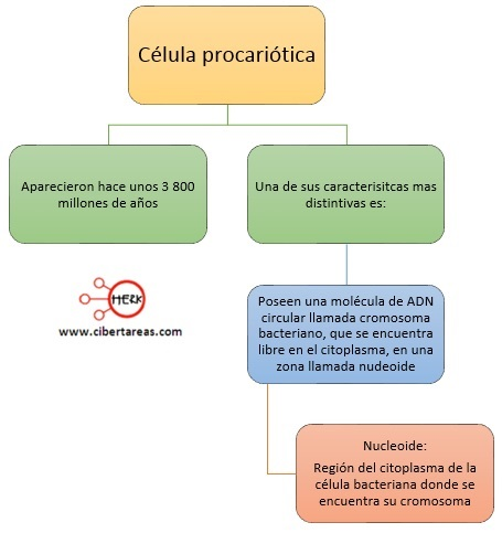 celula procariotica
