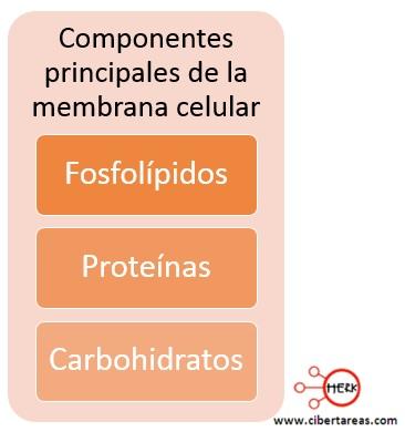 componentes principales de la membrana celular