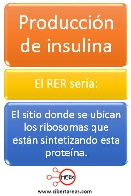 ejemplo de reticulo endoplasmatico produccion de insulina ejemplo