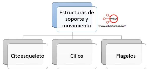 estructuras de soporte y movimiento de la celula citoesqueleto cilios flagelos