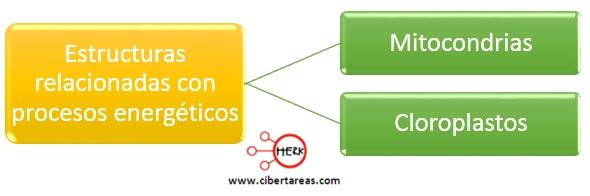 estructuras relacionadas con procesos energeticos